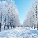 Useful tips to survive the winter